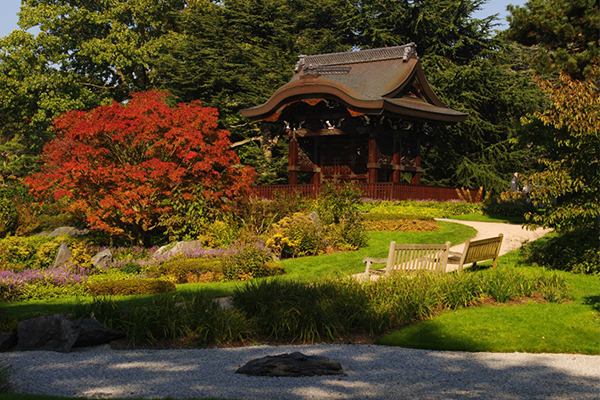 image - Explore the plants, art and culture of Japan this autumn at Kew Gardens