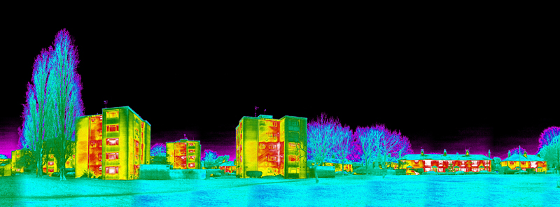Thermal Image of Ham